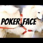poker-face-cover